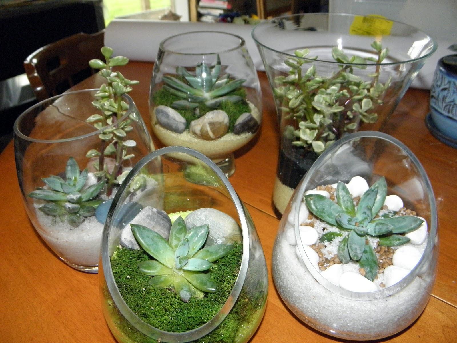 Composizioni in vetro piante grasse idea creativa della for Splendide planimetrie della casa