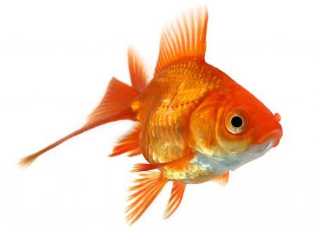 Diario di una pensatrice for Comprare pesci online